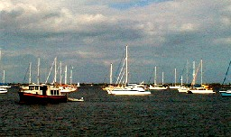 View of Boats from the pier next to Conky Joe's